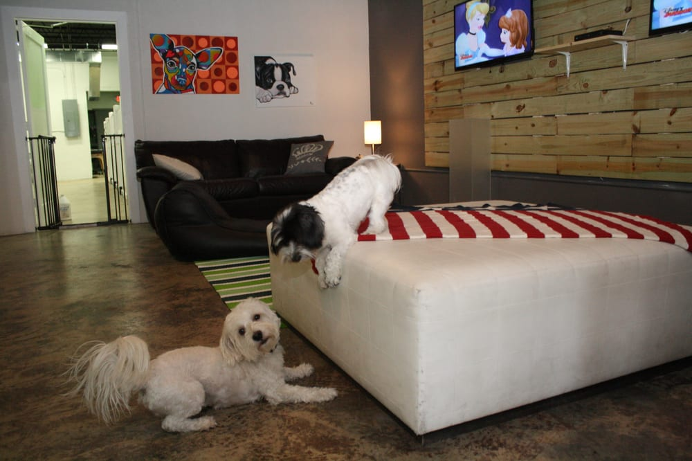 Pet Lounge: 355 NE 79th St, Miami, FL