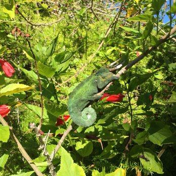 Exceptionnel Photo Of Kula Botanical Gardens   Kula, HI, United States
