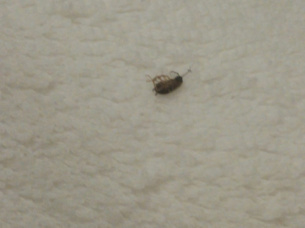 Three Baby Roaches In The Bathroom And One More Spotted After Moving - Baby roaches in bathroom
