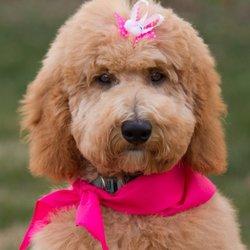 Crockett Doodles - 51 Photos - Pet Training - 412 Fairview
