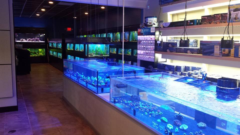 Photos for mystic blue aquarium yelp for Pet fish store near me