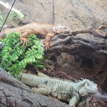 The Reptile Zoo - (New) 593 Photos & 256 Reviews - Zoos