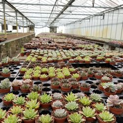 Photo Of Florida Cactus Apopka Fl United States