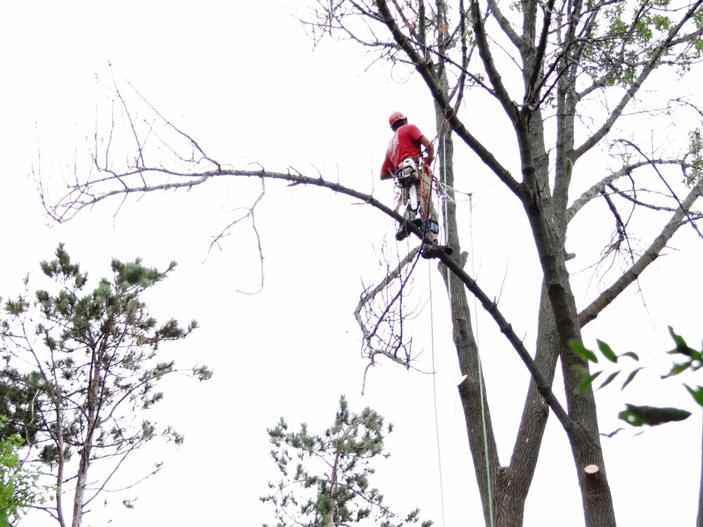 Balmes Tree Service: Beach Park, IL