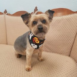 Doggie Style Grooming Get Quote Pet Groomers 1940 N Ave