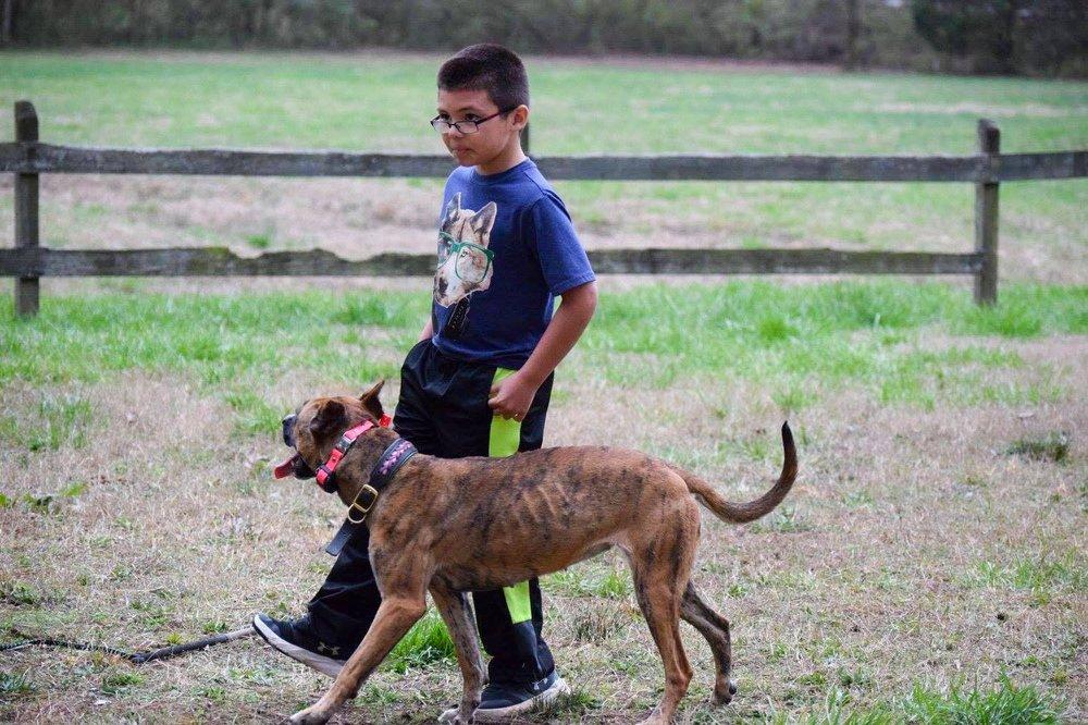 Dog Training In Loganville Ga