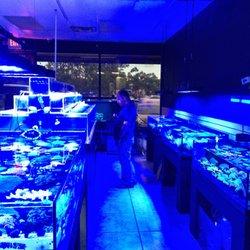 Aquatic Jewels 30 Photos Local Fish Stores 2141