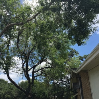 Photo of Canopy Tree Service - San Antonio TX United States & Canopy Tree Service - 14 Photos u0026 15 Reviews - Tree Services ...
