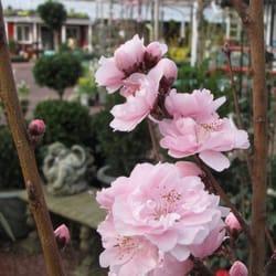Photo Of Habersham Gardens Nursery   Atlanta, GA, United States. Habersham  Gardens