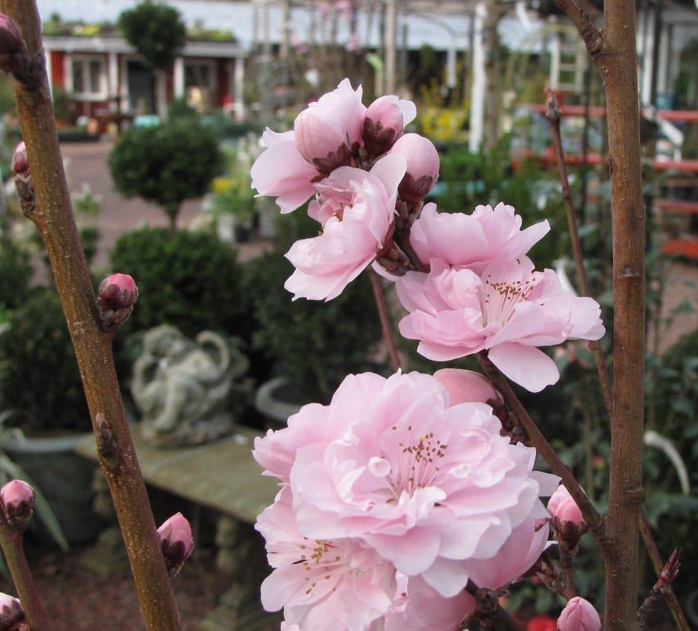 Habersham Gardens Nursery Cerrado Viveros Y Jardiner A