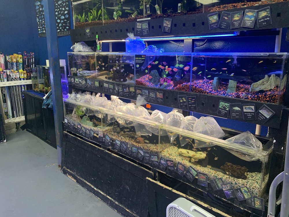 Aquatic Design Aquariums: 1629 N Central Expwy, Plano, TX