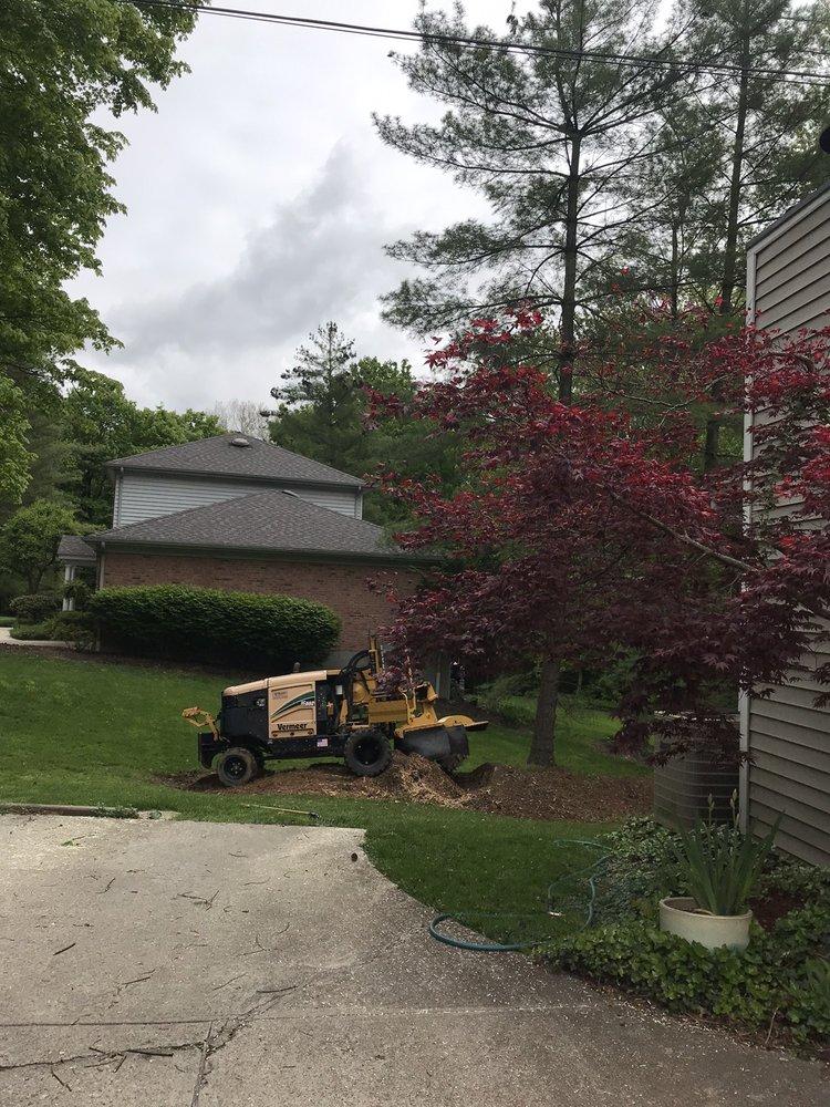 Merriman Tree 'n Stump: Cincinnati, OH