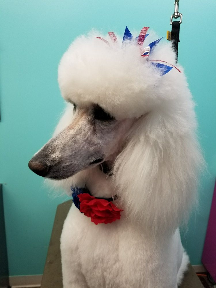 The Spotted Dog Pet Salon: 37140 Colorado Ave, Avon, OH