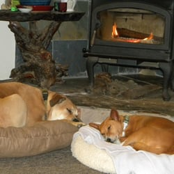 Sunnybrook Dog Boarding - CLOSED - (New) 11 Photos & 11