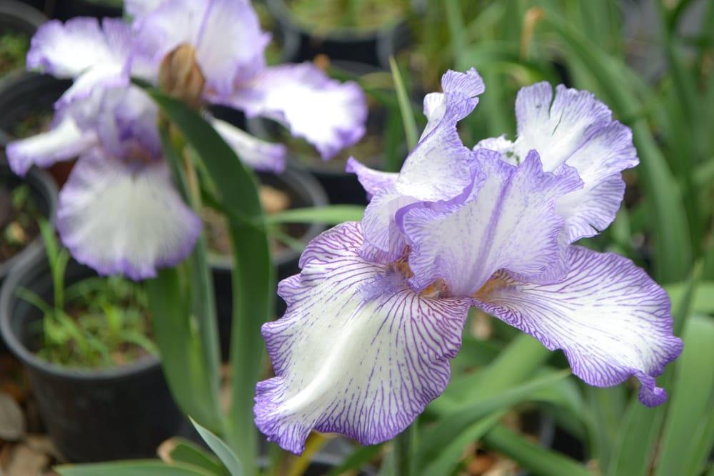 Rainbow Gardens   68 Photos U0026 32 Avis   Jardinerie U0026 Pépinière   2585  Thousand Oaks Dr, San Antonio, TX, États Unis   Numéro De Téléphone   Yelp