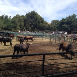 Rowell Ranch Rodeo Festivals Castro Valley Ca