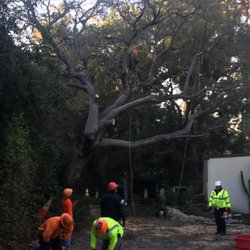 Photo Of Branch Managers Tree Care La Verne Ca United States Removal