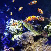 sea life kansas city aquarium 86 photos 111 reviews aquariums 2475 grand blvd kansas. Black Bedroom Furniture Sets. Home Design Ideas