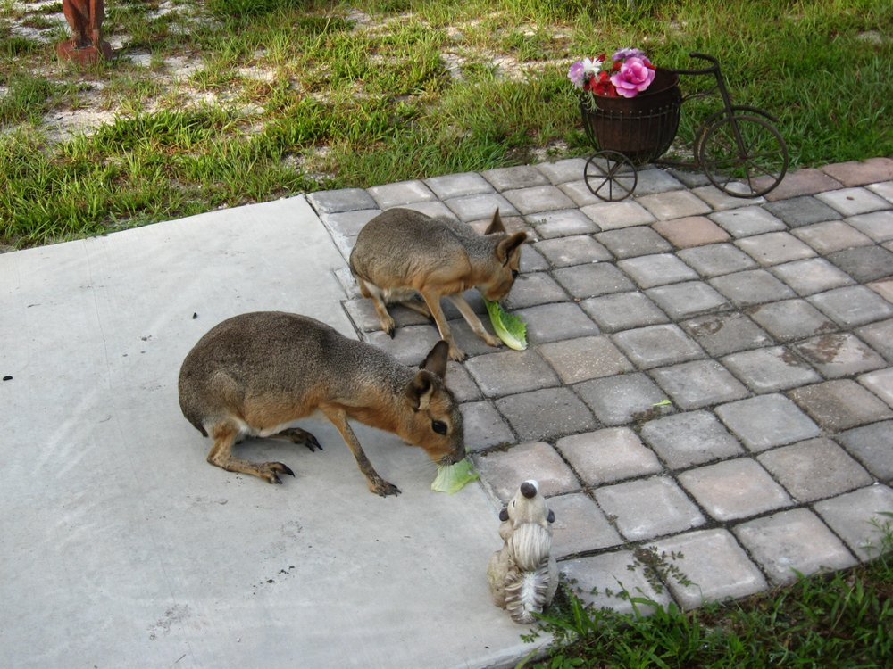 Fallin Pines Critter Rescue: 23643 Christmas Cemetery Rd, Christmas, FL