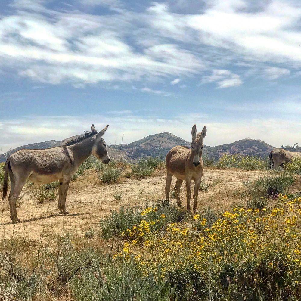 Olive Dell Nudist Ranch: 26520 Keissel Rd, Colton, CA