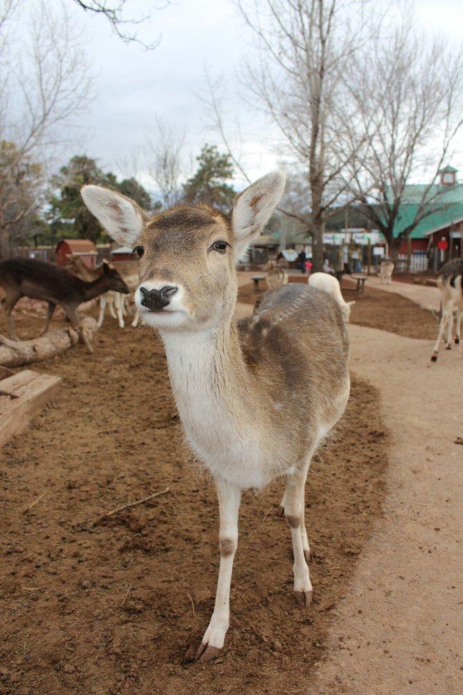 Deer, deer everywhere!! They are calm and friendly  Get free deer