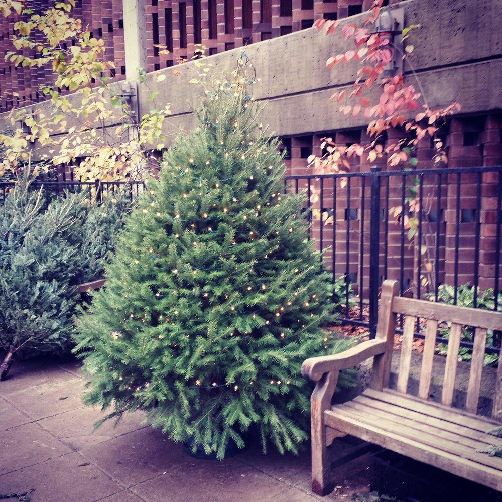 Manhattan Plaza Christmas Trees - Christmas Trees - 434 W 43rd St ...