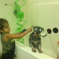 Hairy Beast Dog Cat Grooming