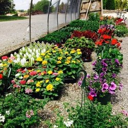 Photo Of Tennessee Nursery And Landscape Supply Franklin Tn United States