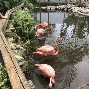 Flamingo Gardens - 1157 Photos & 190 Reviews - Botanical
