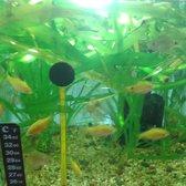 Mascotas pueblito de los dominicos tiendas de mascotas for Comida peces estanque barata