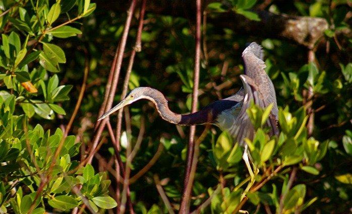 Vantastic Tours-Everglades Adventures: 584 Coconut Ave, Marco Island, FL