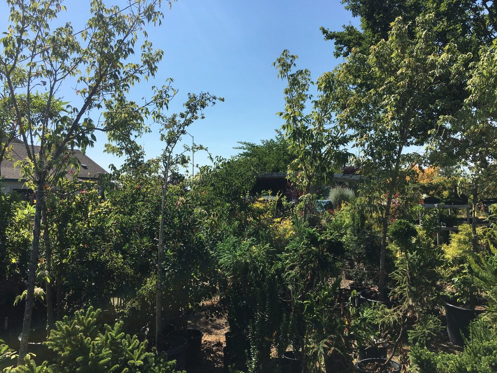 Wild Thyme Nursery: 4416 S 74th St, Tacoma, WA