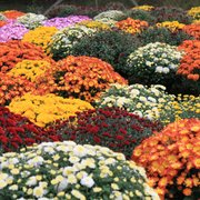 ... Photo Of Stonewall Garden Center   Canadensis, PA, United States