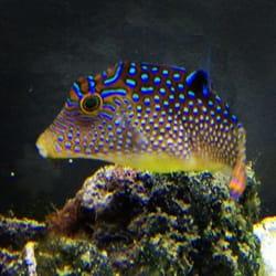 Coral Logic Aquariums Pet Stores 7860 Gate Pkwy