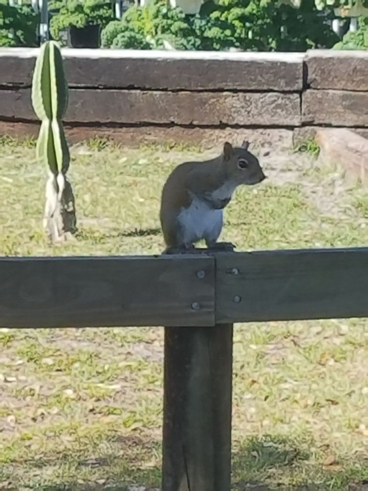 Cute Squirrel Sitting On The Fence Around The Tortoise S