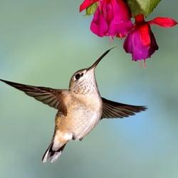 Hummingbird Ln Virginia Beach Va