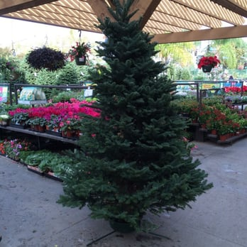 Photo Of Armstrong Garden Centers   Anaheim, CA, United States. Great  Quality Trees