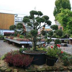 Evergreen Gartenbau gartenbau ziemons get quote gardeners zehntstr 39 b aachen
