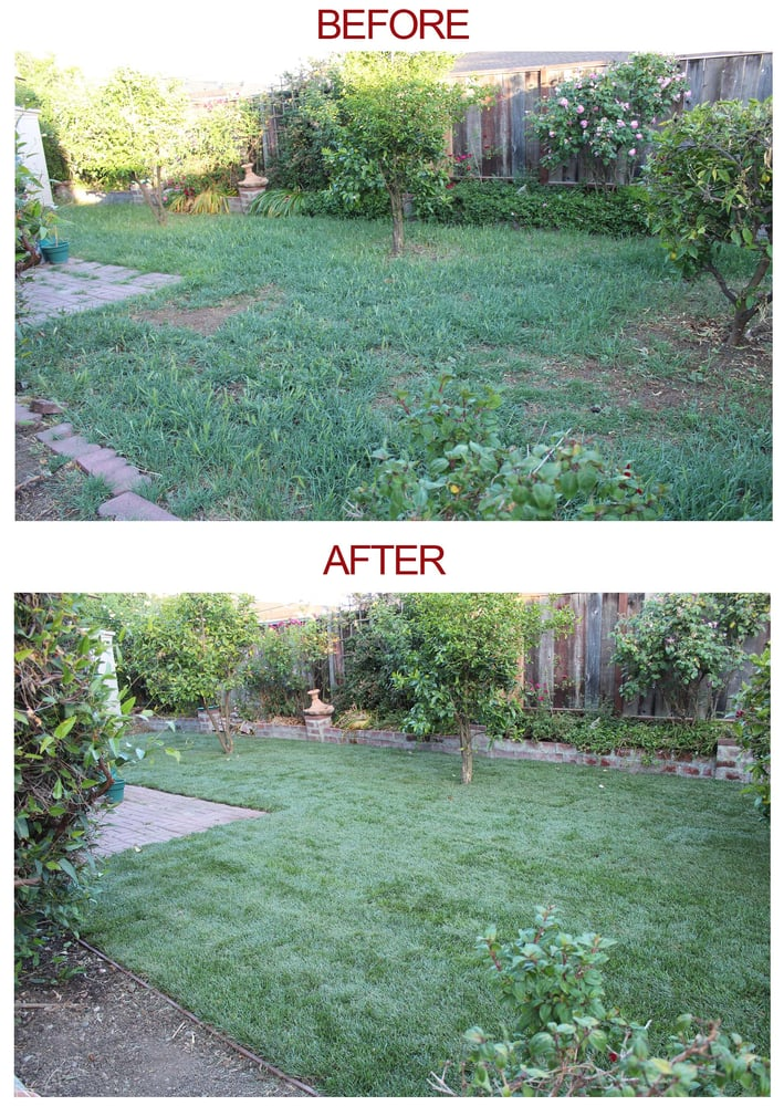 Green grass 11 avis paysagiste 2011 o toole ave for La fenetre san jose