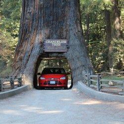 Drive-Thru Tree - 219 Photos & 118 Reviews - Parks - 67402 Drive ...