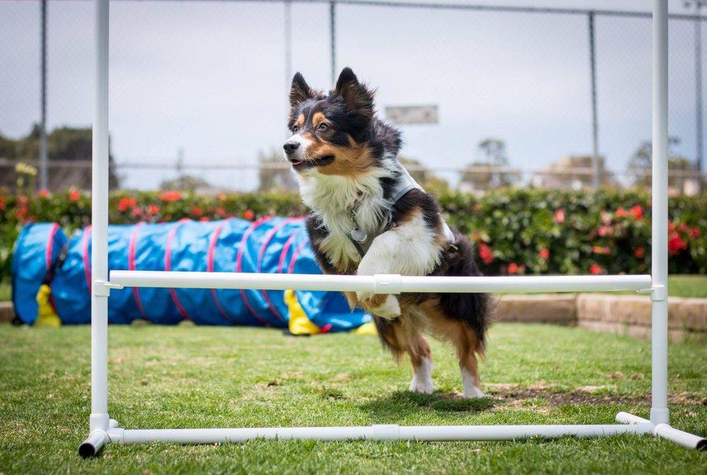 Good Choices Dog Training