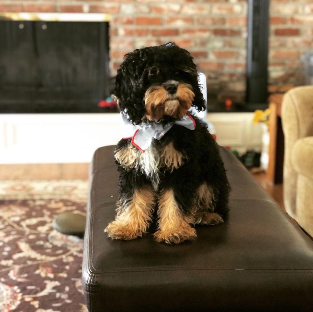 Allie's Paw Spa & Sitting