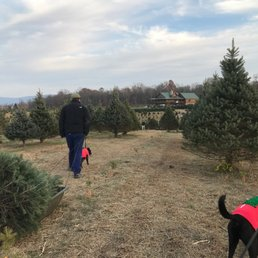 photo of moose apple christmas tree farm berryville va united states - Moose Apple Christmas Tree Farm