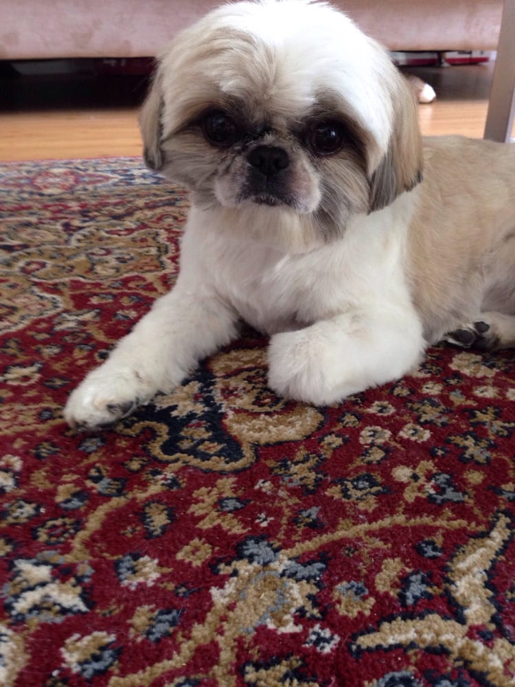 Groomer Has It: 80 Valley Rd, Cos Cob, CT