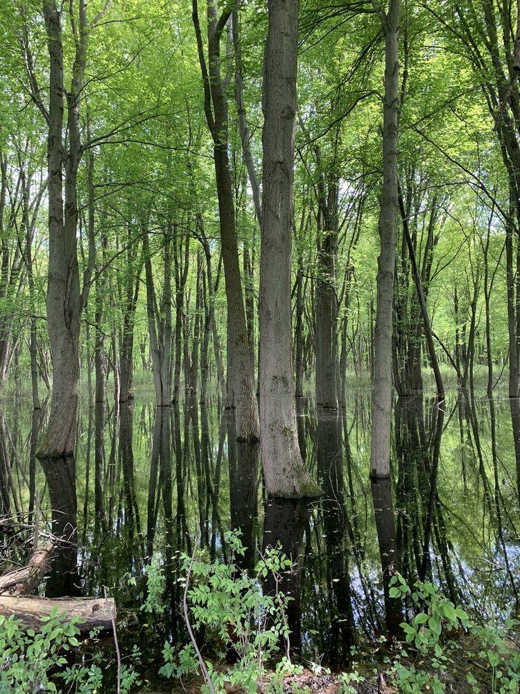 Michigan Wildlife Conservancy: 6380 Drumheller Rd, Bath, MI