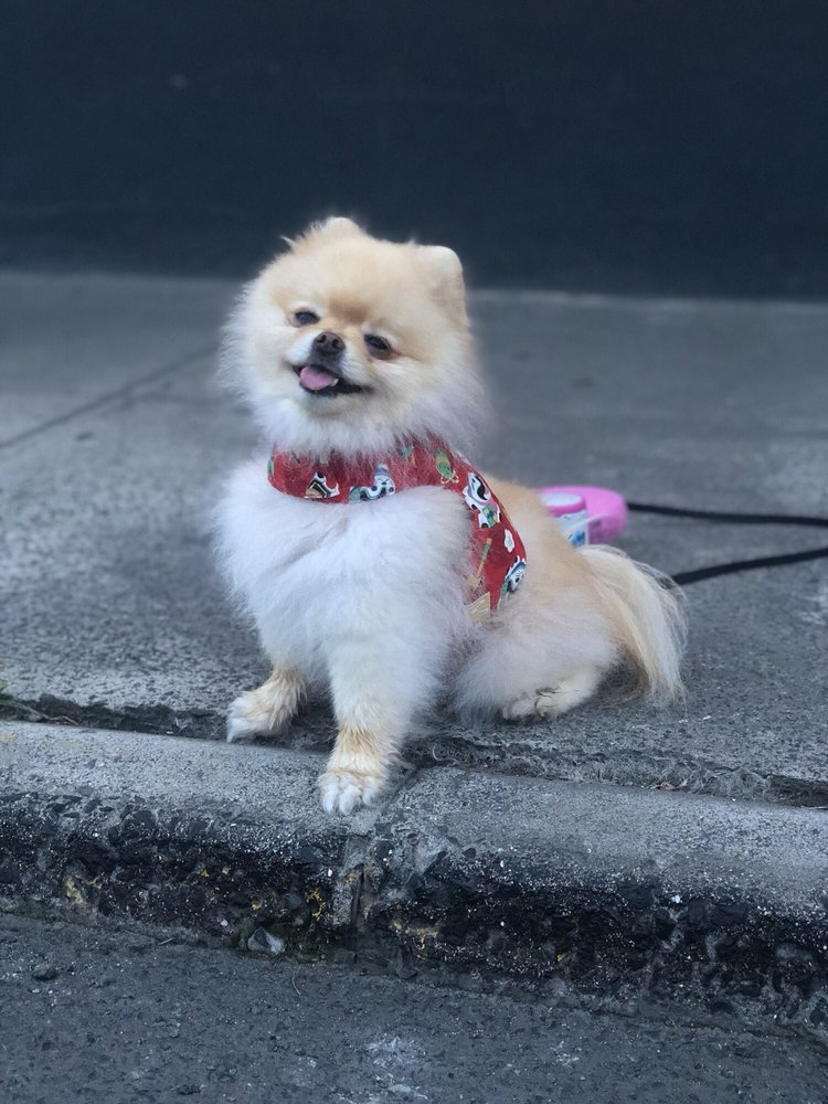Aloha Dog