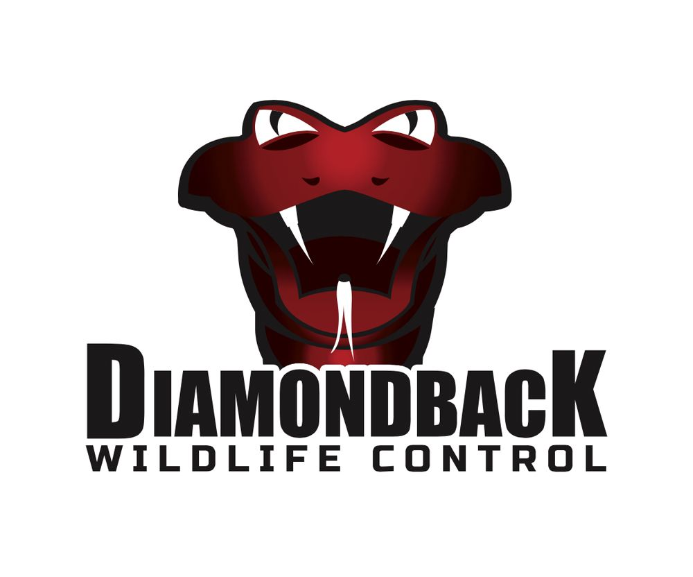 Diamondback Wildlife Control: Tucson, AZ