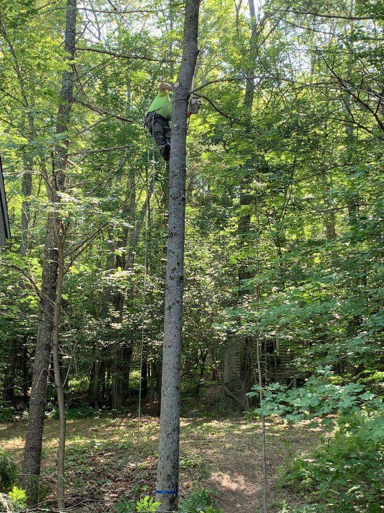Pinnacle Tree Professional Arborists: 47 Water St, Hallowell, ME