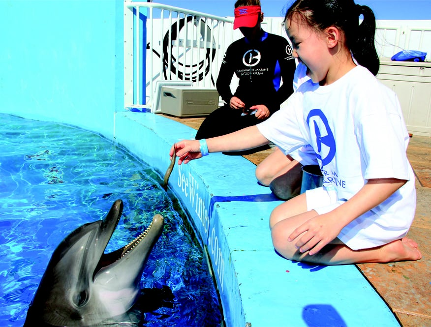 Photo of Clearwater Marine Aquarium: Clearwater, FL