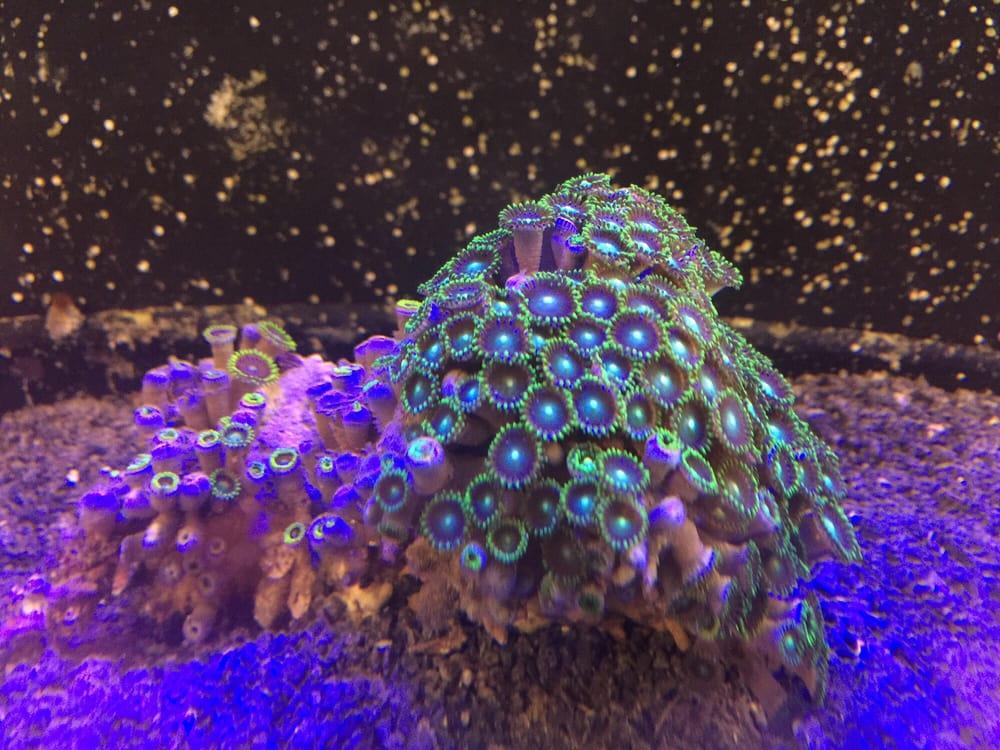 Aquarium Technologies: 5023 Princeton Ave, Midland, TX